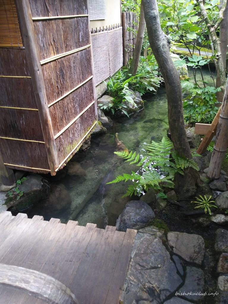 瓢亭 大きな鯉が何匹も優雅に泳いでいました。