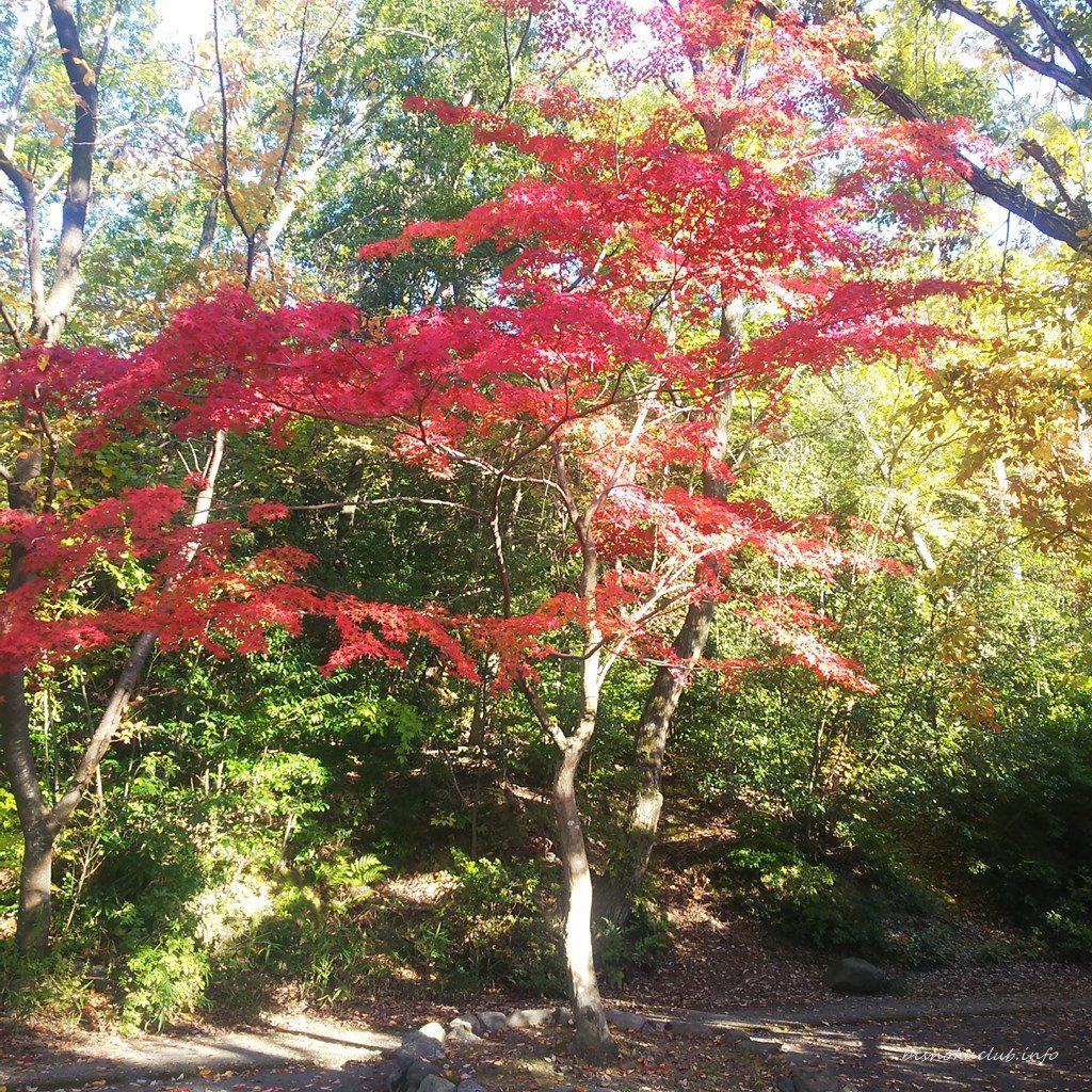 吉田山の紅葉