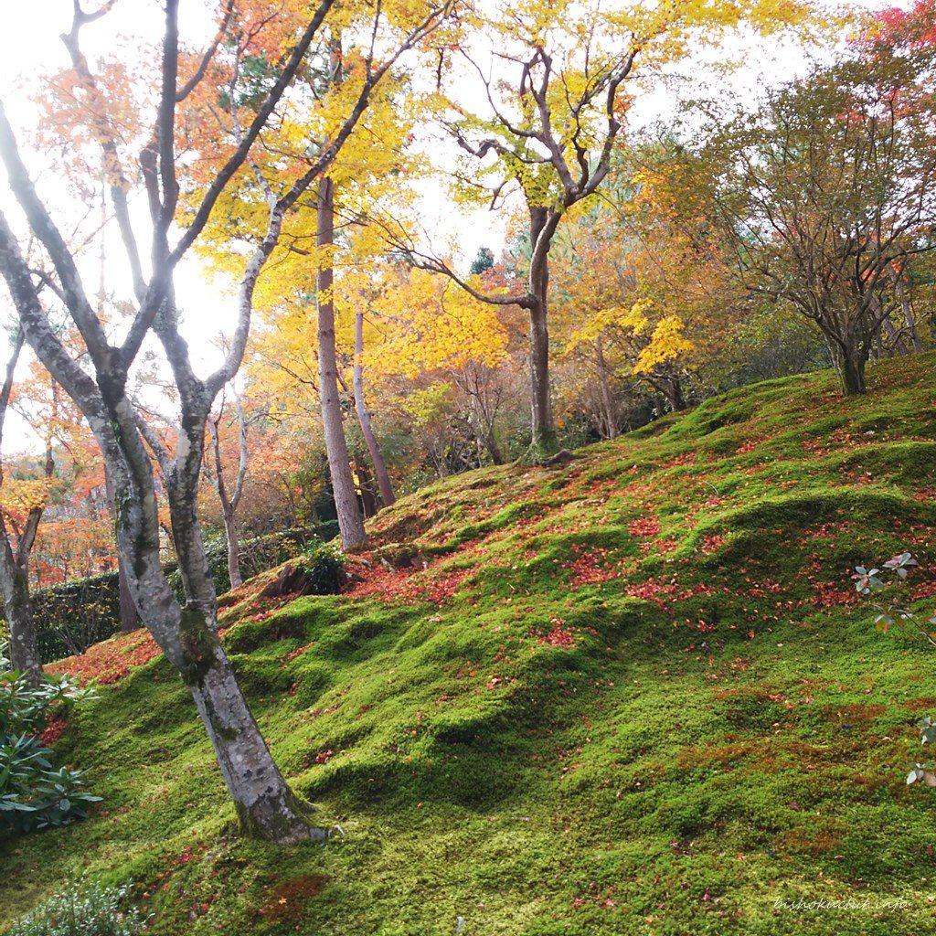 天龍寺の丘