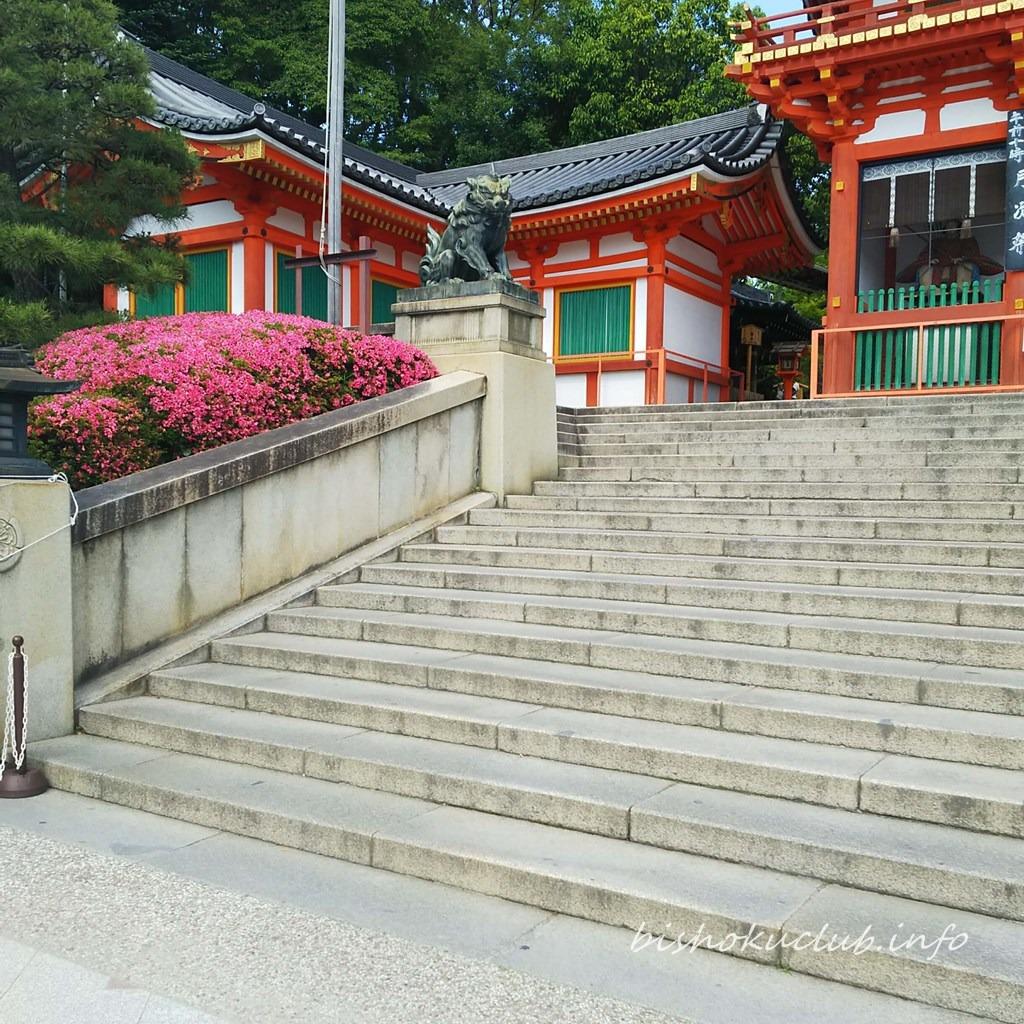 八坂神社のツツジ